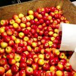 Apples Renee's Limousine, Minneapolis Minnesota